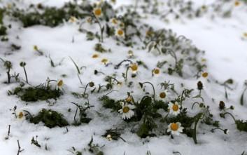 Η Μαγνησία κάνει κούλουμα με χιόνια