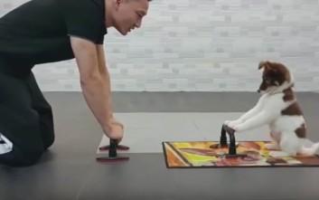 Γυμναστική για ζώα!