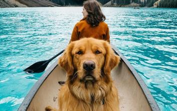 Η ονειρική ζωή ενός σκύλου