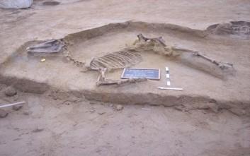 Αποκαλύφθηκε ταφή αλόγου σε ανασκαφή