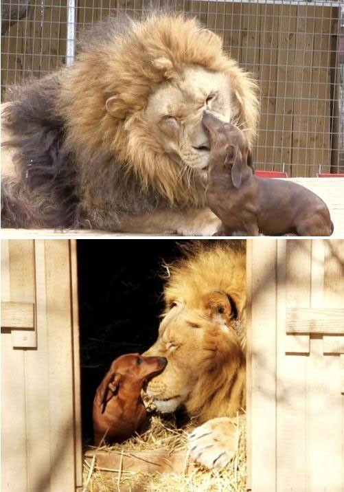 animals_in_love_05