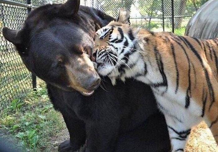 animals_in_love_10