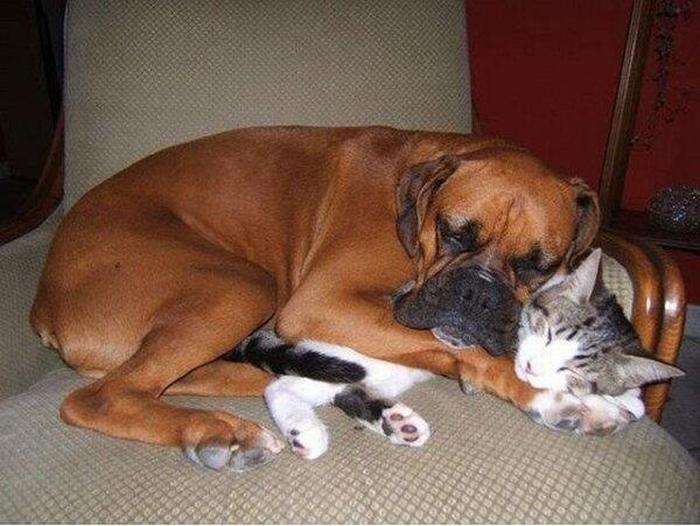 animals_in_love_12