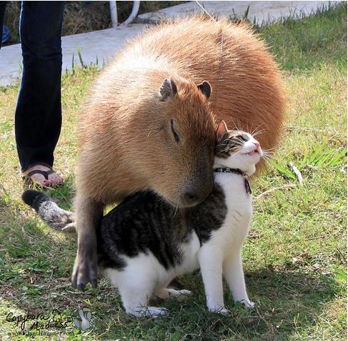 animals_in_love_17
