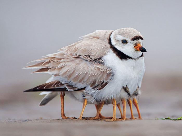 cute-bird-parents-22__700