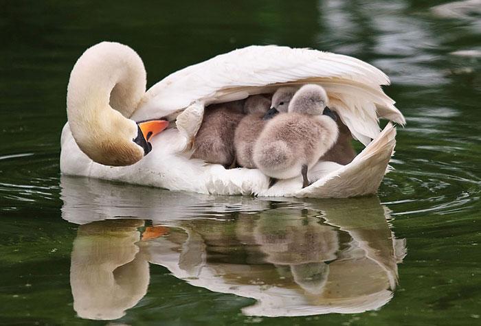cute-bird-parents-23__700
