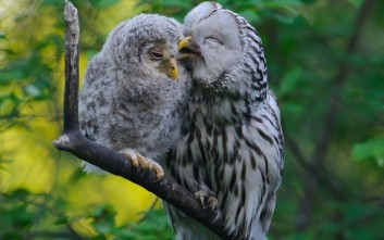 Οικογενειακές στιγμές πτηνών
