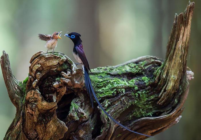 cute-bird-parents-36__700