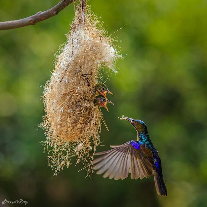 cute-bird-parents-381__700