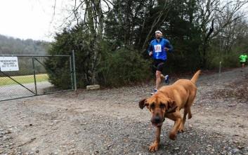 Το σκυλί που έτρεξε ημιμαραθώνιο