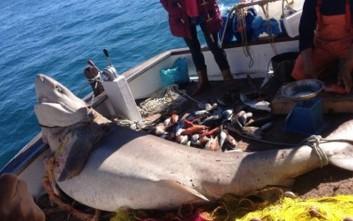 Ψαράς από τον Πόρο έπιασε καρχαρία 2,5 μέτρων