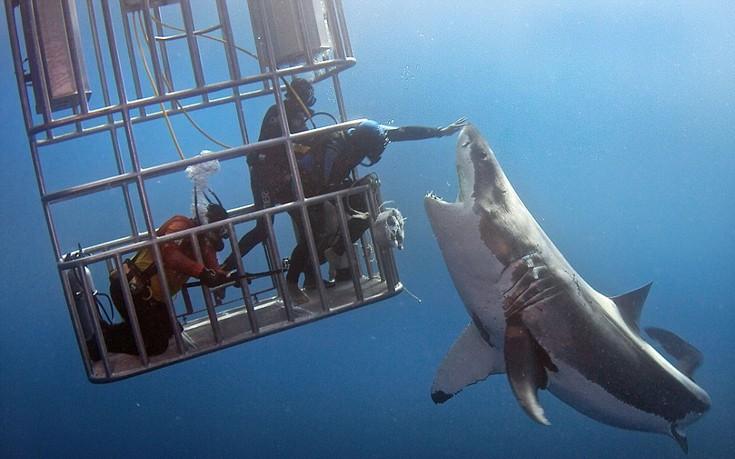 Δύτης χάιδεψε μεγάλο λευκό καρχαρία στη μύτη