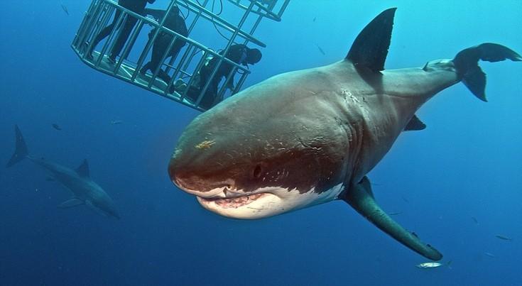 sharks6