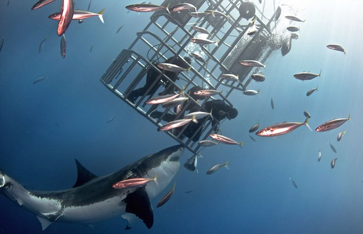 sharks7