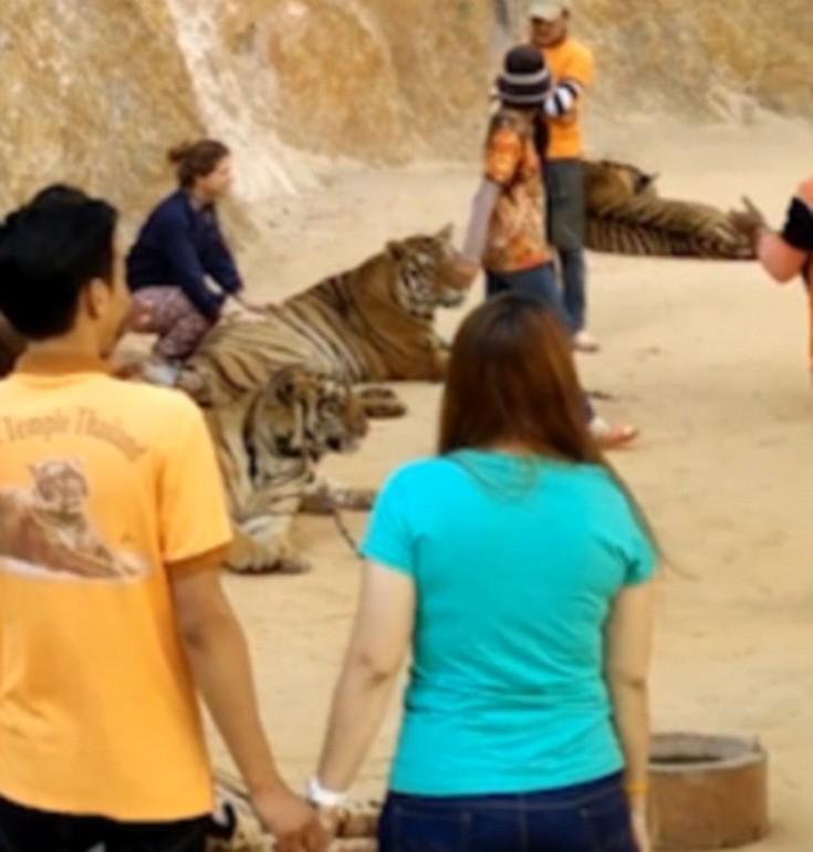 tigr01