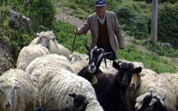 Κτηνοτρόφος στην Κρήτη βρήκε νεκρό σχεδόν όλο το κοπάδι του