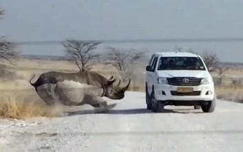 Ρινόκερος ορμά σε τζιπ τουριστών