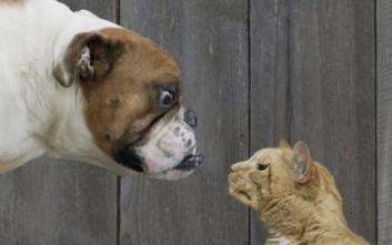 Τι προβλέπει το νέο νομοσχέδιο για σκύλους και γάτες στις πολυκατοικίες