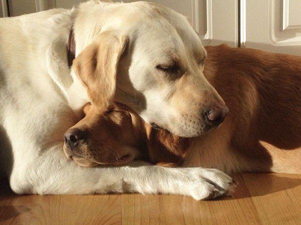 cute-doggie-friends-will-make-you-go-awww-28-photos-10