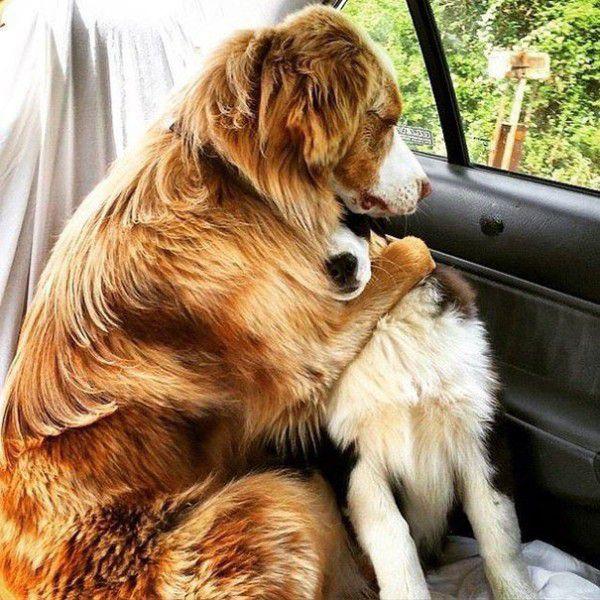 cute-doggie-friends-will-make-you-go-awww-28-photos-12