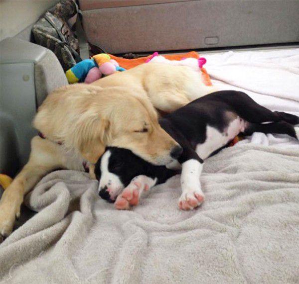 cute-doggie-friends-will-make-you-go-awww-28-photos-13