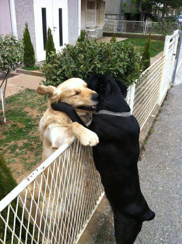 cute-doggie-friends-will-make-you-go-awww-28-photos-16