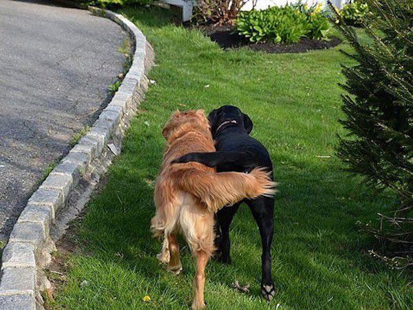 cute-doggie-friends-will-make-you-go-awww-28-photos-17