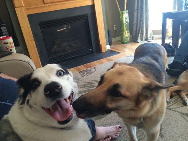 cute-doggie-friends-will-make-you-go-awww-28-photos-19
