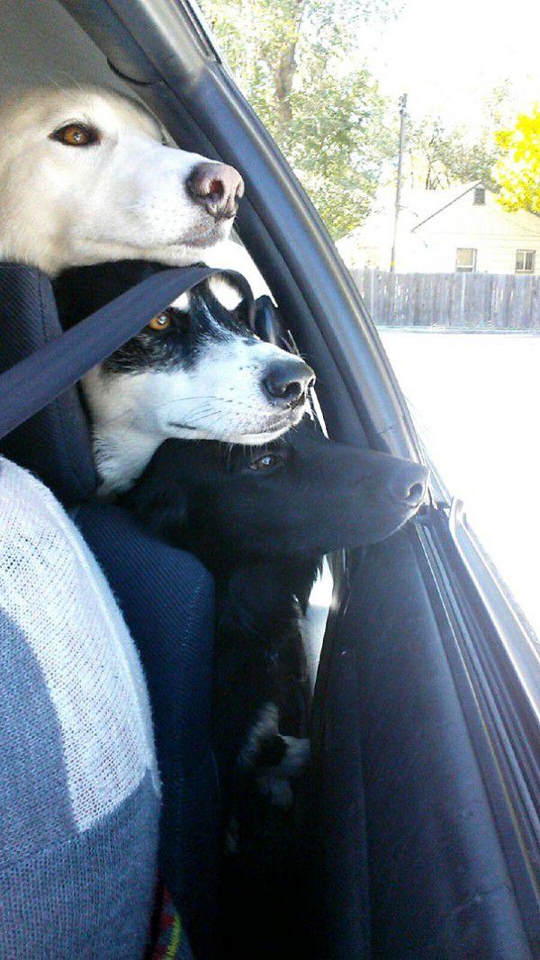 cute-doggie-friends-will-make-you-go-awww-28-photos-25