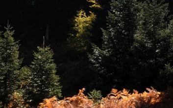 Τα δάση που θερμαίνουν αντί να δροσίζουν την ατμόσφαιρα