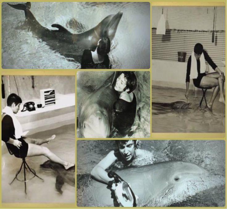 delfin-experiment-Margaret-Howe-Lovattova