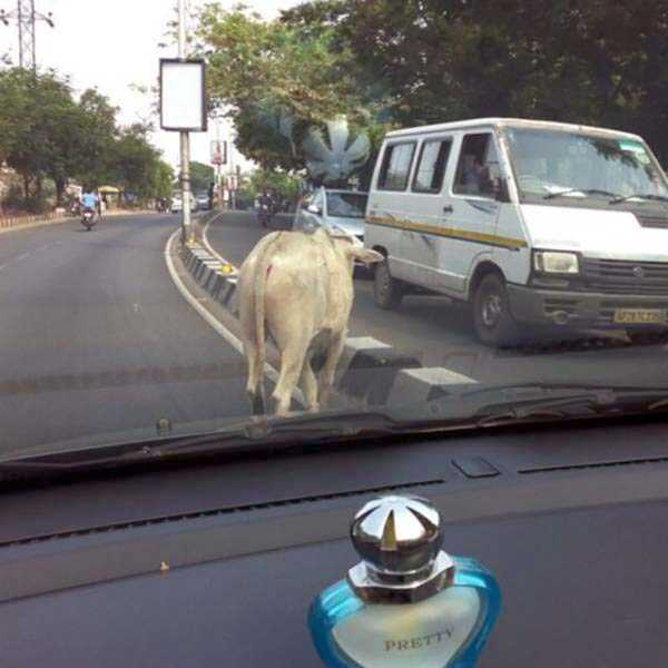 funny-pictures-from-india-21