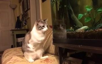 Γάτα με δύο πόδια και... 300.000 followers