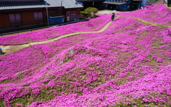 Φύτεψε χιλιάδες λουλούδια στον κήπο για να τα μυρίσει η τυφλή γυναίκα του