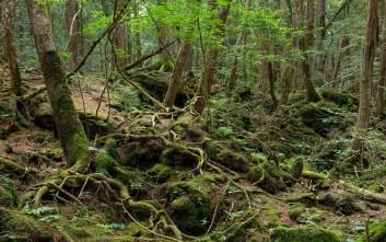 Το «δάσος των αυτοκτονιών» στην Ιαπωνία γίνεται ταινία