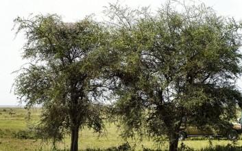 Η κρυμμένη λεοπάρδαλη που νιώθει… πουλί