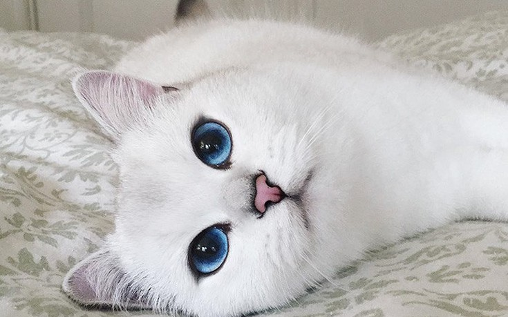 Ο γάτος με τα απίστευτα μάτια