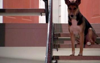 Ο πιστός σκύλος που περιμένει μάταια το δολοφονημένο αφεντικό του