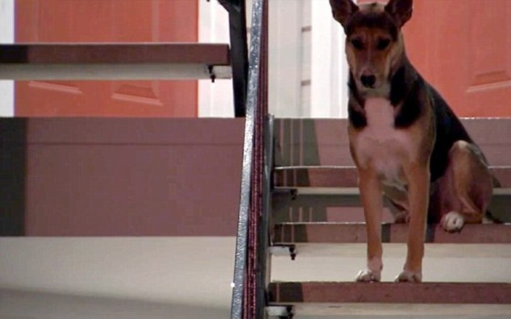 Σκύλος πιστός σκύλος αφεντικό