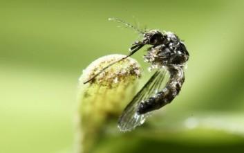 Φόβοι ότι ο ιός Ζίκα κάνει ζημιά τύπου Αλτσχάιμερ στον εγκέφαλο των ενηλίκων