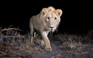 Κρυμμένες φωτογραφικές μηχανές φωτογραφίζουν τα άγρια ζώα της Αφρικής