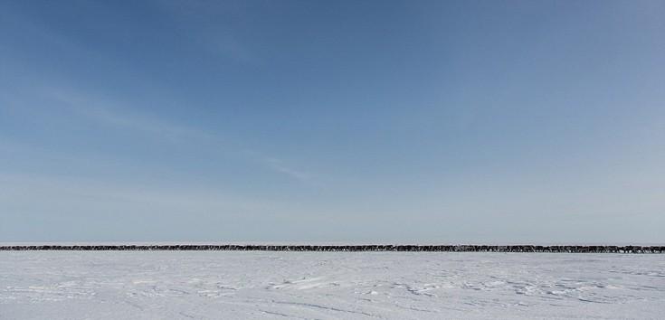 Arcticnomads10