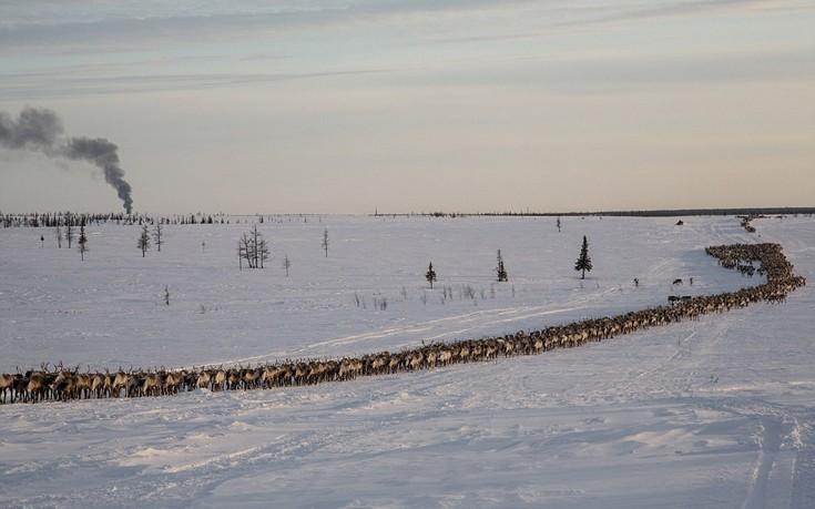 Arcticnomads5