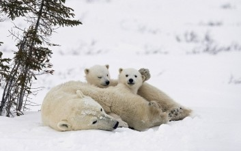 Τρόμαξε μια πολική αρκούδα και πλήρωσε πρόστιμο 1.300 ευρώ