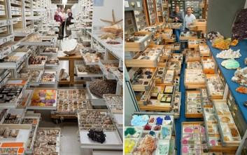 Στο εσωτερικό της μυστικής συλλογής του Μουσείου Φυσικής Ιστορίας των ΗΠΑ