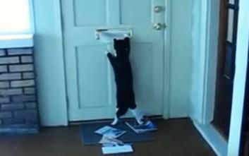 Γάτες παραλαμβάνουν την αλληλογραφία