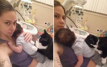 «Αυτοκόλλητοι» γάτα και νεογέννητο