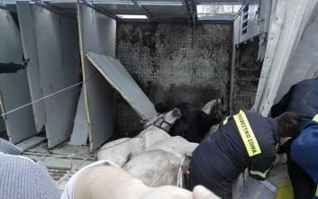 Νταλίκα φορτωμένη με άλογα ανετράπη στην Εγνατία Οδό