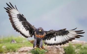 Σπάνια απαθανατίζεις πουλί σε τέτοια πόζα