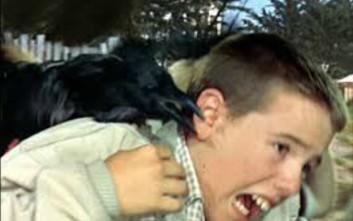 Πουλιά εναντίον ανθρώπων
